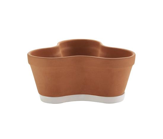 Kensaku Oshiro Clover Pot